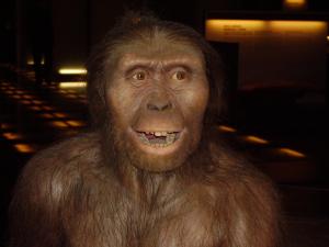 Reproduccion Australopithecus afarensis a Cosmocaixa Barcelona, Catalunya i