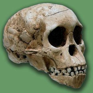 nino-de-taung-australopitecus
