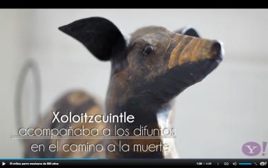 Perro itzcuintle azteca rodrigo-cruz