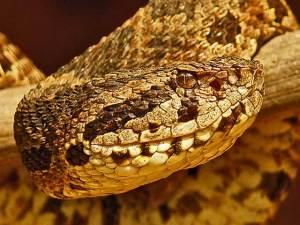 Serpiente o culebra