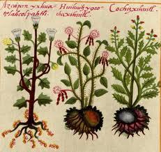 Yerbas Medicinales utilizadas por los aztecas, ilustradas en el Códice de la Cruz-Badiano