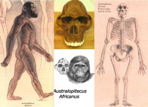 Australopitecus africanus