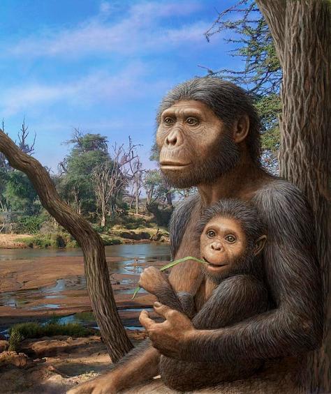 australopithecus-afarensis-artwork-mauricio-anton