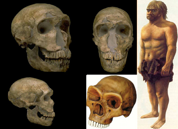 Hombre de Neandertal
