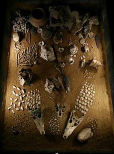 Ofrendas funerarias aztecas de flora y fauna templo mayor Tenochtitlan Mexico