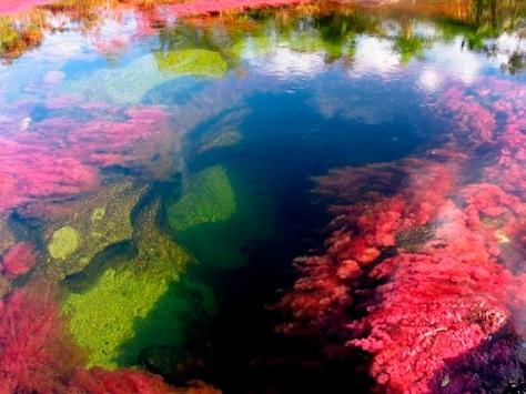 Caño Cristales o Río de Cinco Colores, Colombia