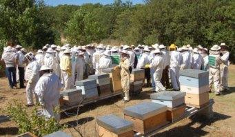 Participantes del curso de apicultura, en una de las lecciones prácticas.