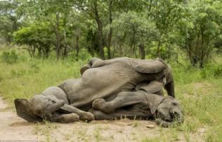 elefantes-borrachos-1-620x400-1
