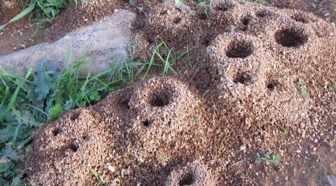 ¿Son las Hormigas la Solución al Calentamiento Global?