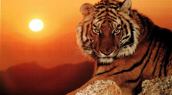 4 DE OCTUBRE DÍA MUNDIAL DEL ANIMAL FOTOS ESPECIES EN PELIGRO DE EXTINCIÓN