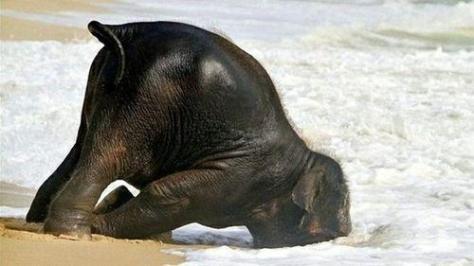 Ya no quiero verte: elefantito jugando The GW Zoo