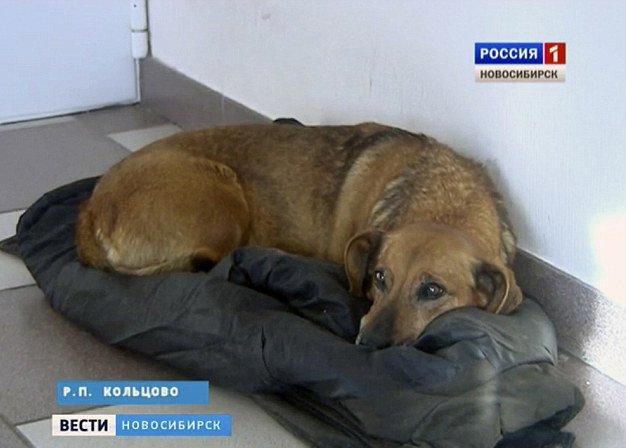 Masha perrita esperando a su dueño fallecido