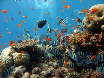 cruceros a zonas de coral