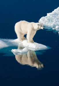oso-polar-el-artico-se-derrite