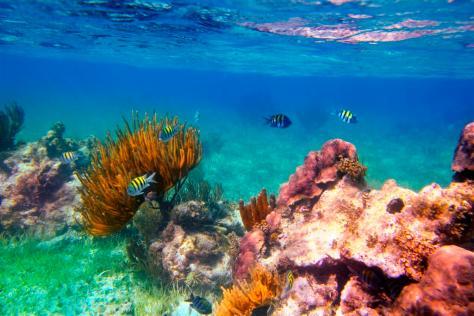 cancun-12 arrecife de coral