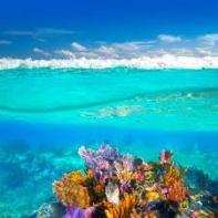 Cancun arrecife de coral