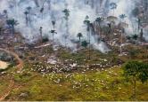 incendio de un bosque en Brasil para construir o aprovechar los arboles con otros fines Bored Panda