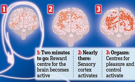 ¿Qué ocurre en el cerebro durante el orgasmo? 2
