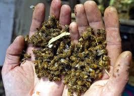 Muerte de abejas