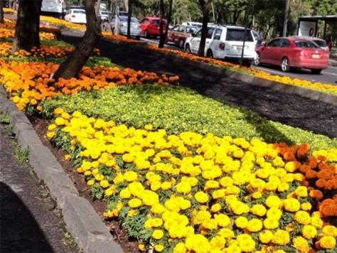 Paseo de la Reforma cempasuchitl