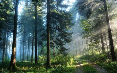 amanecer en el bosque sendero