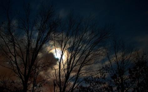 luna llena bosque 123-1
