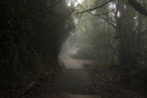 sendero bosque neblina