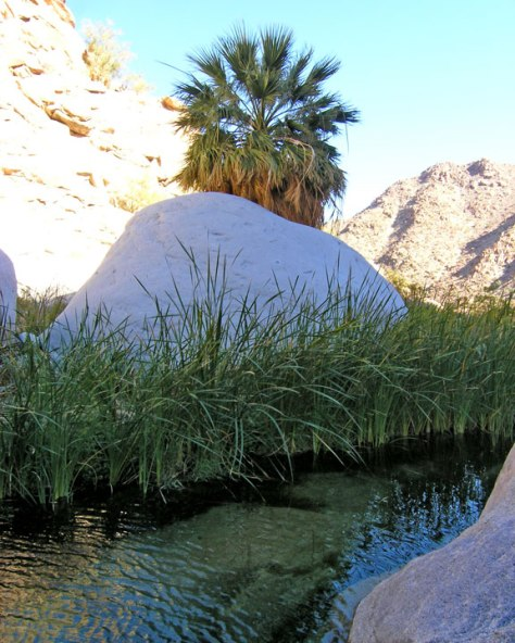oasis-canon-de-guadalupe