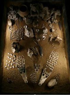 Ofrenda funeraria de flora y fauna Templo Mayor Tenochtitlan México