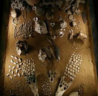 ofrendas-funerarias-de-flora-y-fauna-templo-mayor-tenochtitlan-mexico1