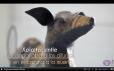 xoloitzcuintle perro que acompaña a los muertos