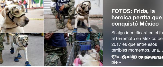 FOTOS: Frida, la heroica perrita rescatista que conquistó a México tras el sismo