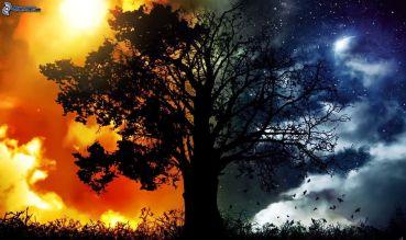 silueta-de-un-arbol,-dia-y-noche-232797